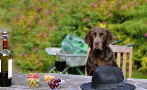 Pinot With Your Pup: Dog Friendly Wineries