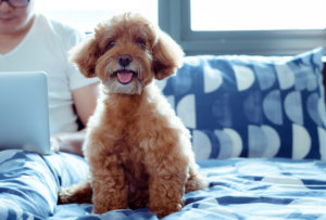 Hotels With Low Room Rates and Low Pet Fees (or No Pet Fees)