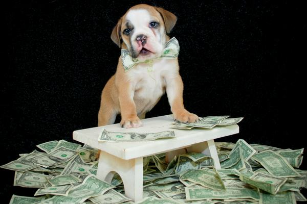 how to afford dog medical bill