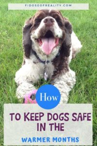 Warm Weather Dangers: How To Keep Dogs Cool in Summer