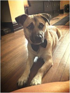 Five Ways to Incorporate Your Pet Into a Wedding