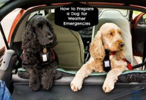 How to Prepare a Dog for Weather Emergencies #NatlPrepSign The Disaster Prep Pledge