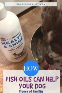 Here's How Fish Oil For Dogs Can Help Your Pooch
