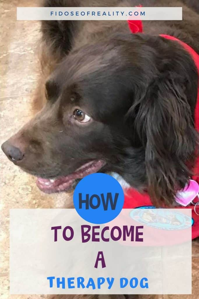 How to become a therapy dog