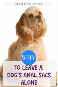 Why You Should Leave A Dog's Anal Sacs Alone