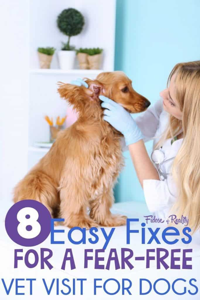 8 Easy Fixes For A Fear Free Veterinary Visit For Dogs