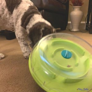 101 Things To Do Indoors With Your Dog