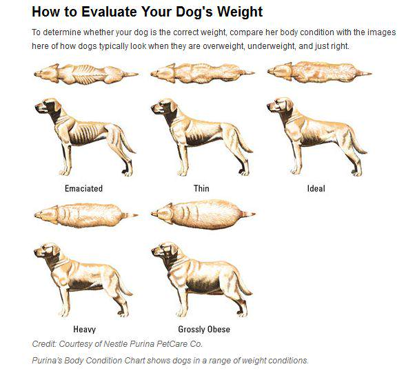how to tell if dog is overweight