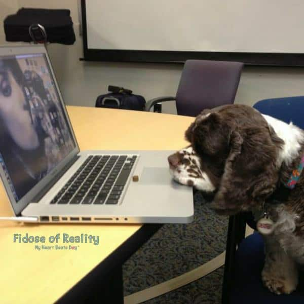 How to Make Your Dog Popular on Social Media