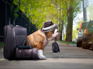Discriminating Pet Travelers: Poll Reveals their Preferences and Habits