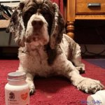 Is CoQ10 For Dogs Beneficial For Heart Disease?