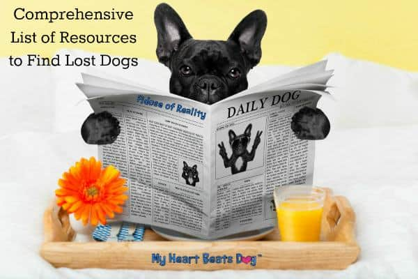 Comprehensive List of Resources to Find Lost Dogs