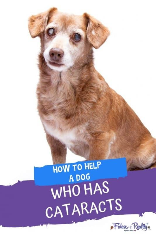 How to help a dog who has cataracts