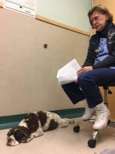 Help For IMT: Immune Mediated Thrombocytopenia in Dogs