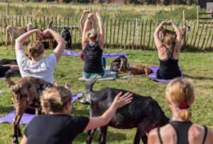 Get Your Zen On with Goat Yoga