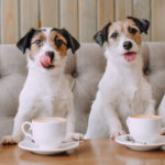 From urban walks to coffee shop talks, from sipping ales to wagging tails–finding social groups for like-minded pet lovers is easier than ever