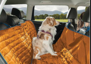 Survey Reveals More Pets are Buckling up!